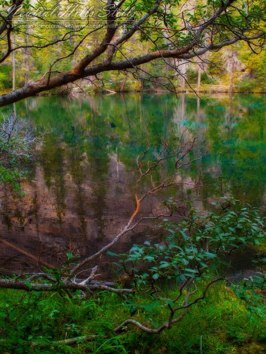Grassi Lakes Seen Thru Tree Branches