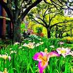 Spring in action outside the Freeman school #Tulane #onlyattulane #onlyinneworleans #nola #spring