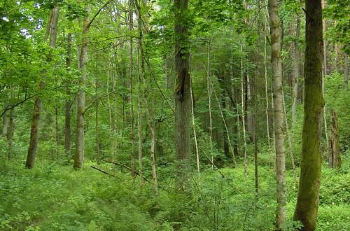nature forest latvia