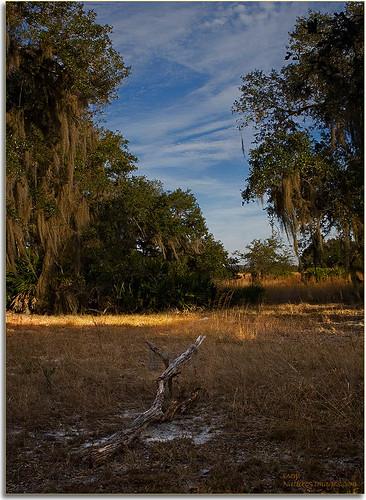 landscapes parks weatheredwood professionalphotographer blending stateparks 2470mm oldflorida floridaimages detailstudies lakekissimmee floridastateparks photoworkshops phototourguide