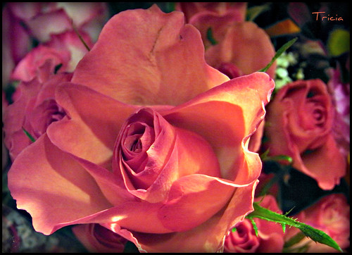 Love is:     Giving that  special someone, peach roses