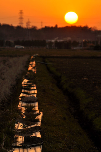 sunset japan evening twilight dusk chiba 夕陽 sakura ricefield 2009 200mm 佐倉 田圃 印旛沼 nikond90 20090214 imbanumamarsh