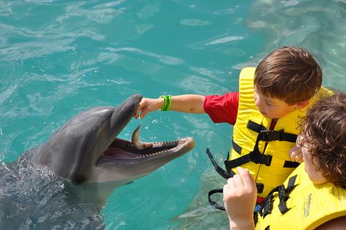 Vive un encuentro con delfines en Cozumel