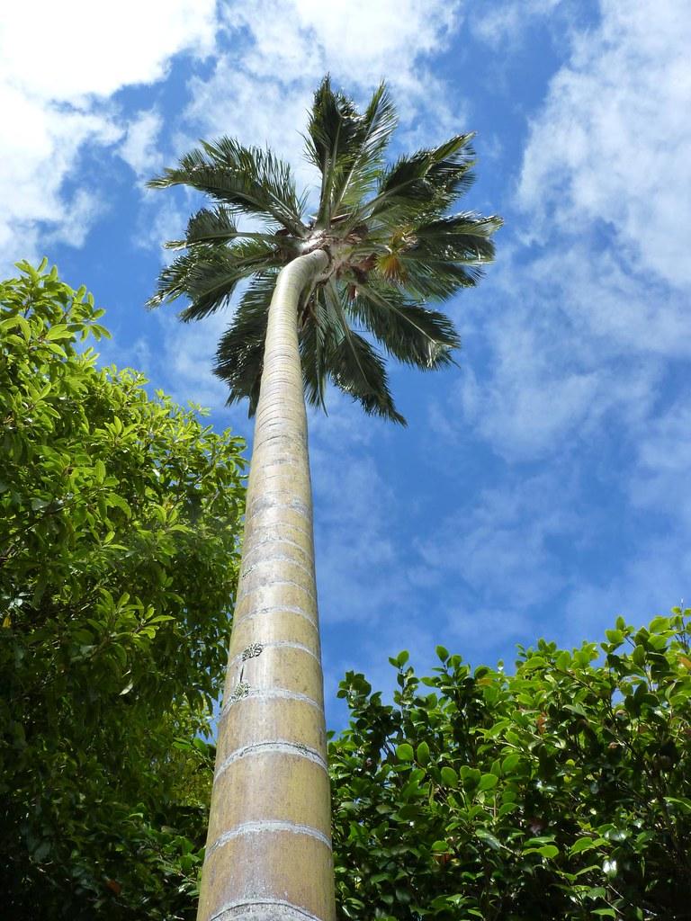 Jard n bot nico nacional vi a del mar chile 39 s most for Jardin botanico vina