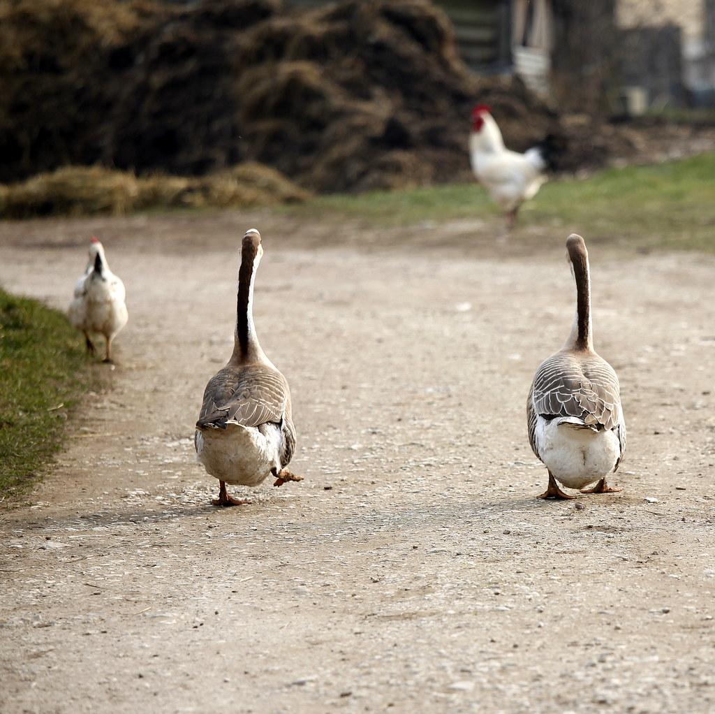 goose step