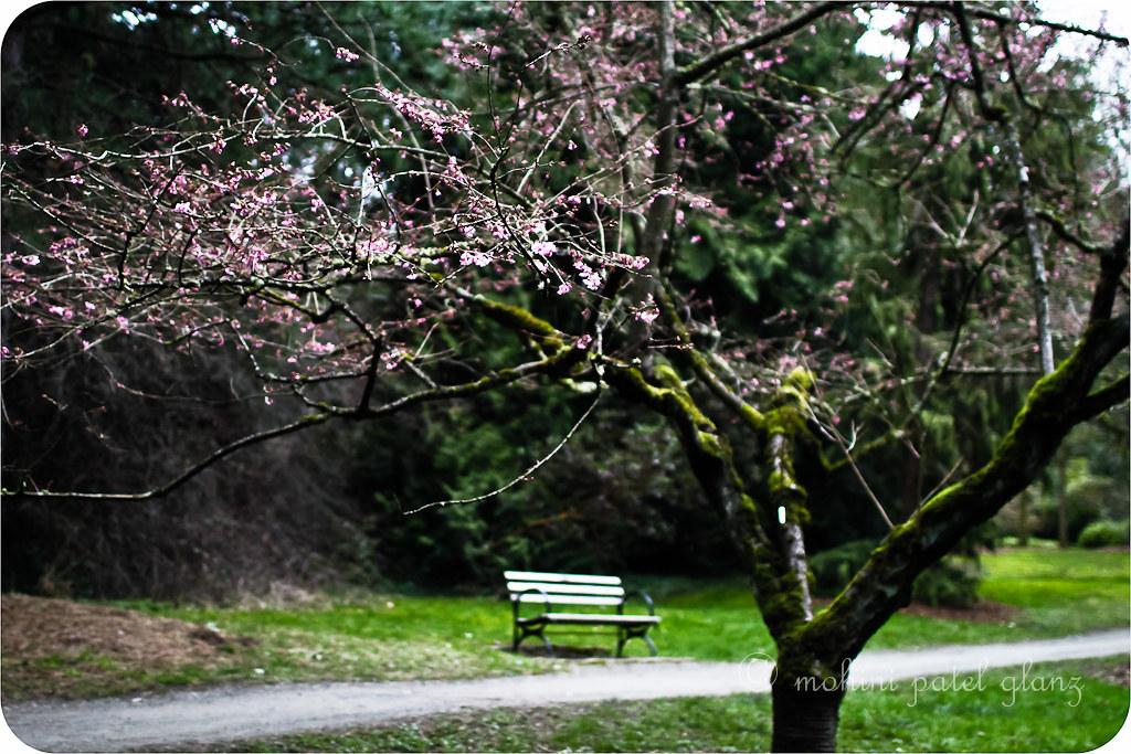 arboretum blossoms #6