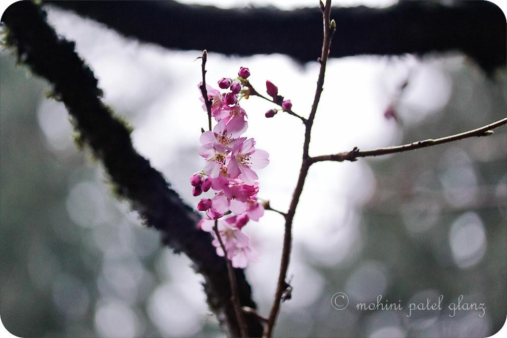 arboretum blossoms #1
