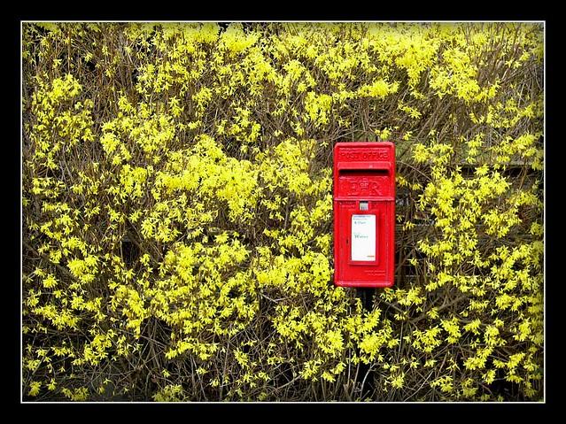 yellow and red, Panasonic DMC-LC33