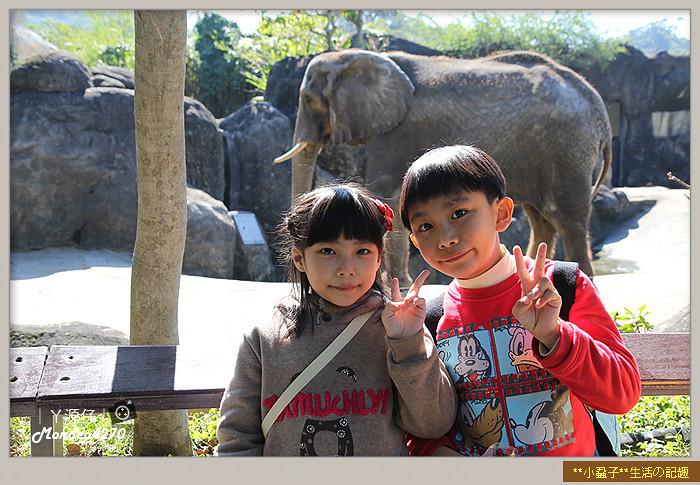 木柵動物園(圓仔)36