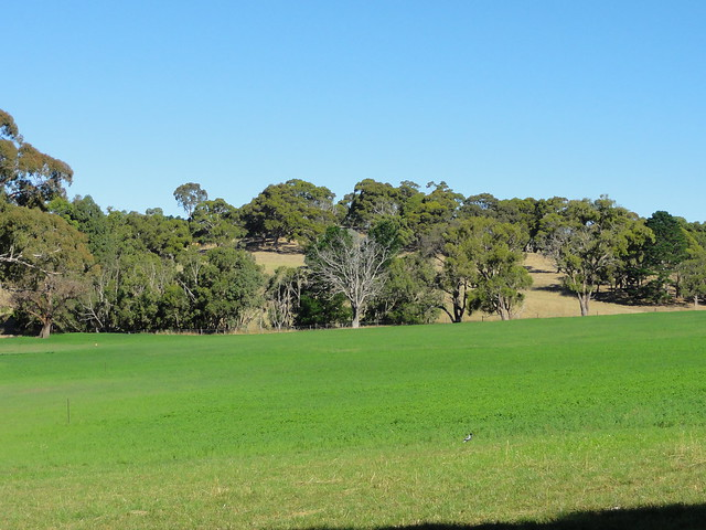 pin adelaide hills australia - photo #5