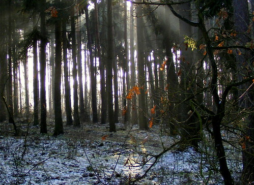 light forest poland