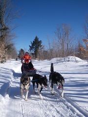 dog, winter, vehicle, snow, mushing, dog sled, land vehicle, sled dog racing, sled dog, sled,