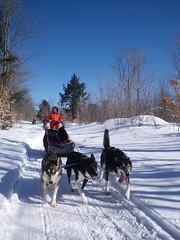 pet(0.0), dog(1.0), winter(1.0), vehicle(1.0), snow(1.0), mushing(1.0), dog sled(1.0), land vehicle(1.0), sled dog racing(1.0), sled dog(1.0), sled(1.0),