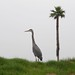 <p>A great blue heron looking off into the distance.</p>