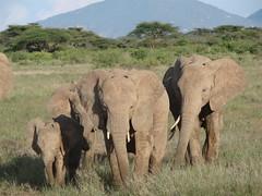 Samburu NR Kenya 2007 3