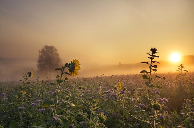 early autumn awakening (Explore)