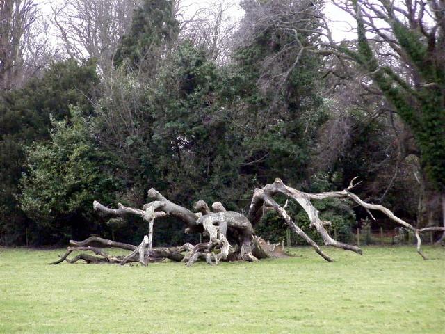 Ballkillingan trees  - spider...