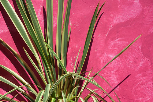 pink plant green colors leaves wall contrast colombia paint colonial vegetation villadeleyva boyaca