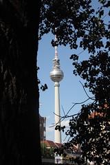 Fernsehturm & Baum