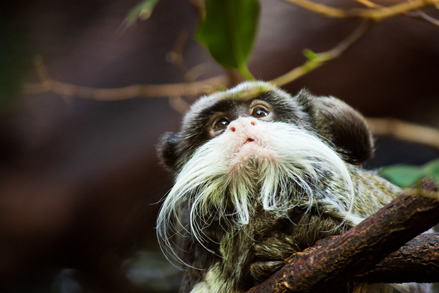 Beardy Monkey: 5422469119_3c802472a6_z.jpg