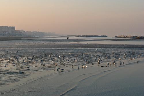 sea beach field dock sand nikon mare seagull campo depth spiaggia molo gabbiani sabbia 105mmf28 luciobattisti profondità cocali unoinpiù cuchel