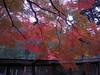 Photo:丹生川上神社下社 - Niu kawawami shrine shimosha // 2010.11.14 - 05 By Tamago Moffle