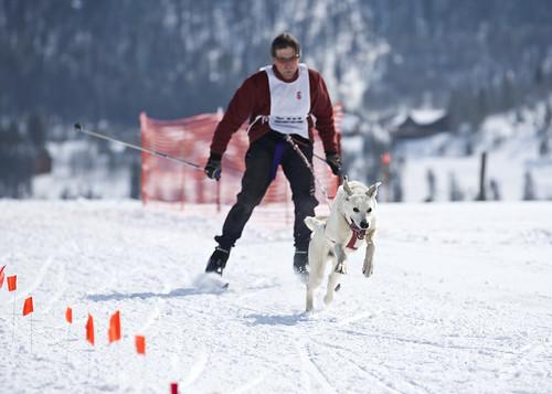 Skijoring 8