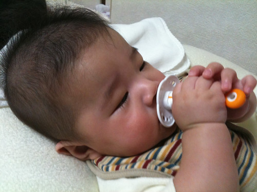 赤ちゃん歯ブラシをしゃぶるとらちゃん