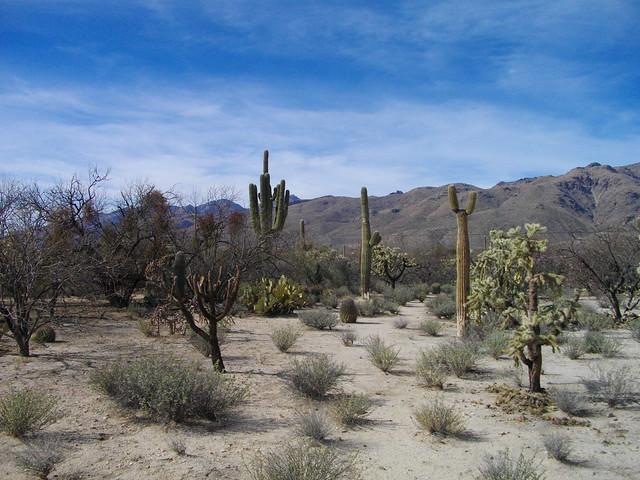 Tucson Arizona Food Stamps Eligibility