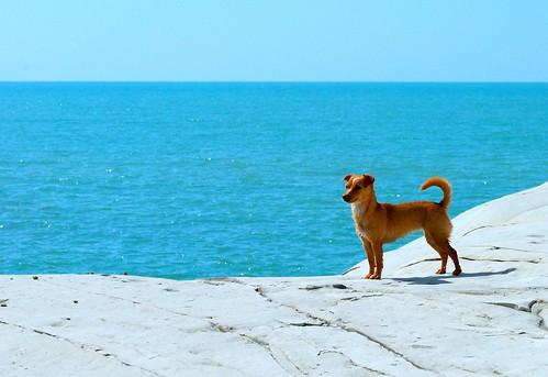 [フリー画像素材] 動物 1, 犬・イヌ, 海 ID:201211151000