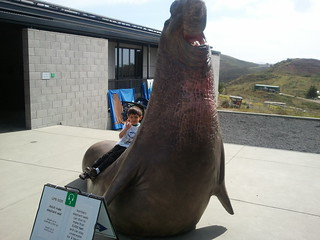Moishe on a life size model of an elephant seal at the Marine Mammal Center at Run For the Seals 2011