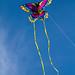 Kite Fest 2011-0058.jpg