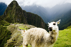 llama(0.0), mountain goat(0.0), animal(1.0), mountain(1.0), nature(1.0), mountain range(1.0), grazing(1.0), fauna(1.0), meadow(1.0), landscape(1.0), camel-like mammal(1.0), pasture(1.0),