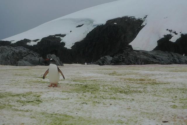 Petermann Island Weather