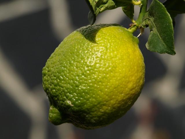 mi forma de pintar un limón (Ver en grande para sacarle todo su jugo ...