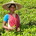 Young Tea Picker Outside Srimongal, Bangladesh