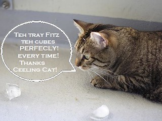 Cat thanks Ceiling Cat for ice cubes