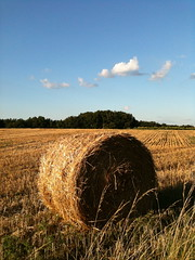 hay bail in a field 1