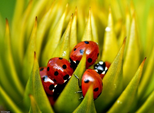 2300. Ladybird Convention. (Explored)