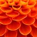 Flower by Michael Baeron