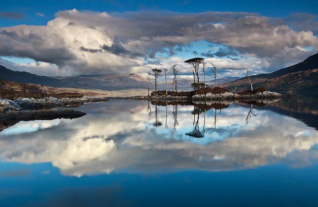 Trees, Loch Assynt