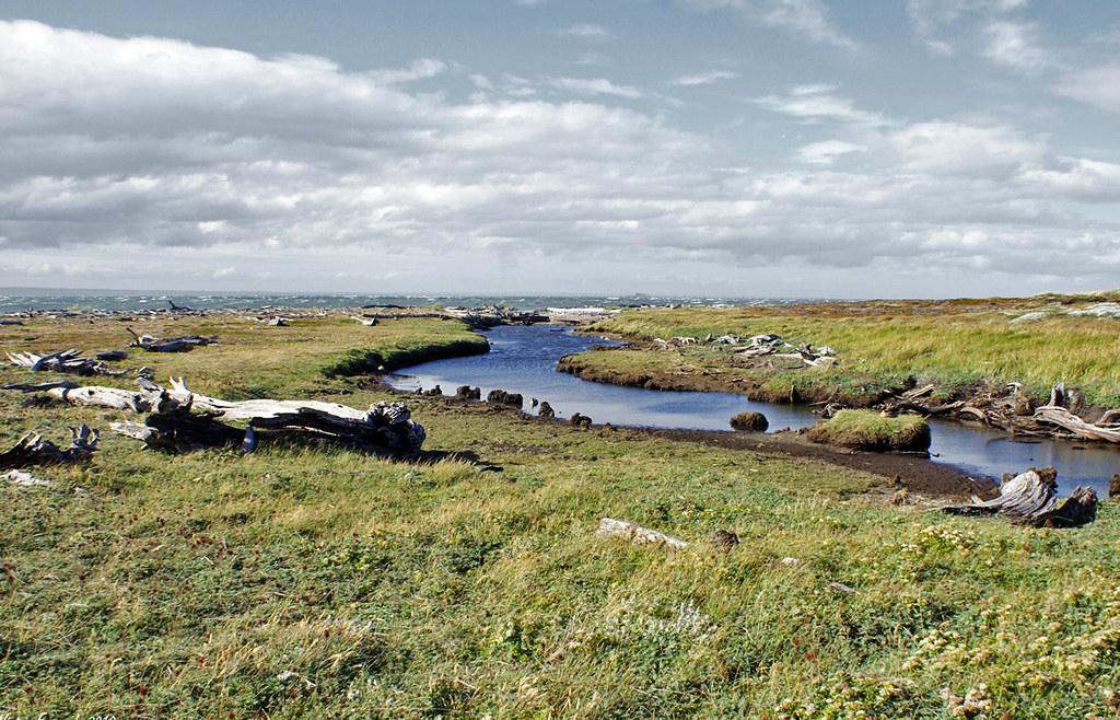 Pinguinera Seno Otway - Punta Arenas - Patagonia - Chile