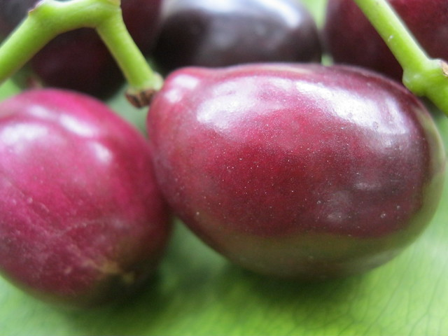 Black Plum (Duhat) 1 | Flickr - Photo Sharing!