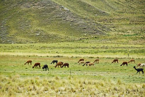 Bolivia_2011_58