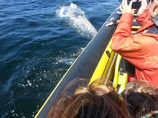 Whale Watching Adventure Tofino, British Columbia