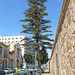 HDR - Araucaria Heterophylla by Moisés Pinto · Photography