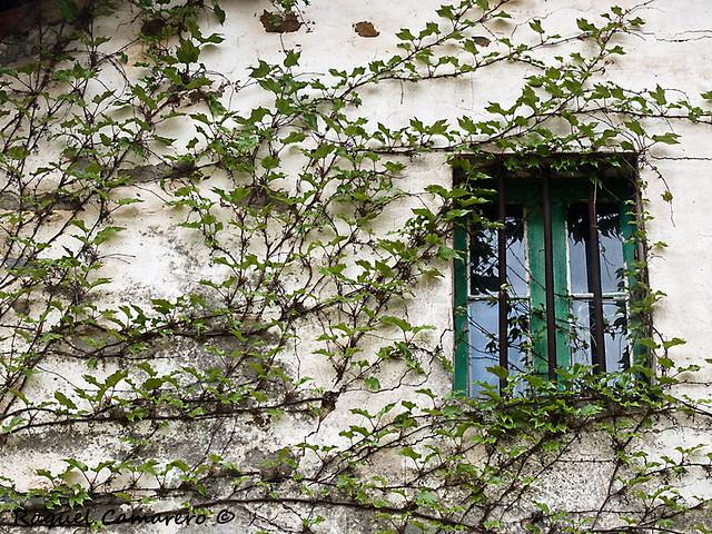 La ventana entre la hiedra