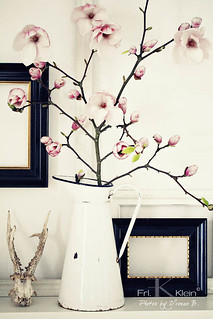 magnolia in my home