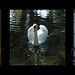Small photo of Swan Collection