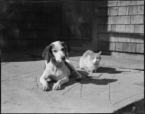 Dog and cat, Hanson, Mass.